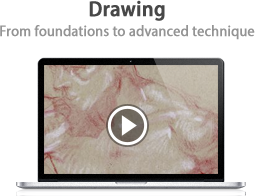 Drawing: From foundations to advanced technique