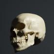 skull_reference_07