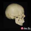 CL30_Skull1