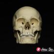 CL30_Skull2