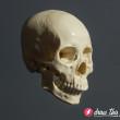 CL30_Skull3