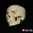 CL30_Skull4