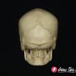 CL30_Skull5