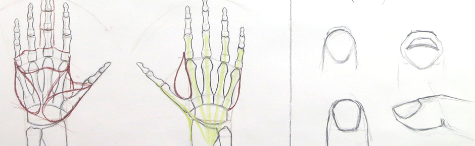Introduction to the Structure of the Hand