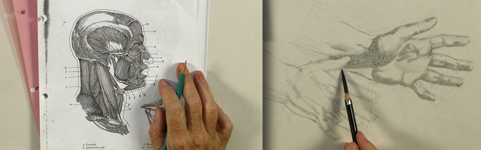 Reilly Method Figure Drawing with Mark Westermoe Week 6: Designing the Hands